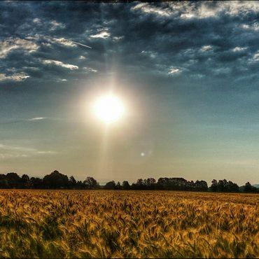 Blick auf ein Getreidefeld. Oben strahlt die Sonne sehr stark.